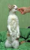 Äter katten Royaltyfria Bilder
