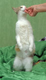 Äter katten Arkivbild