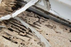 Äter ruttet trä för termitskada redet förstör begrepp Royaltyfria Foton