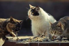 Äter tillfällig katt tre Royaltyfri Fotografi