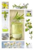 Ätherische Öle und Kräutermedizinblumen stockfoto
