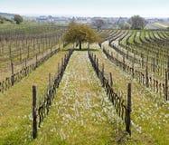 Ätherische Landschaft im Frühjahr Lizenzfreies Stockfoto