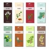 Ätherisches Öl beschriftet Sammlung Teebaum, Myrrhe, Wacholderbusch, Kiefer, Zimt, Kampfer, Zeder, Zypresse, Weihrauch lizenzfreie abbildung
