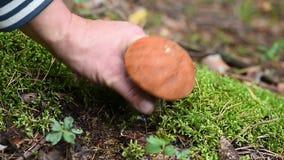 Ätlig champinjon för manhandtag i skogen lager videofilmer