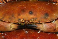 ätlig krabba 01 Arkivfoton