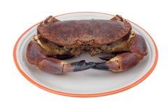 ätlig krabba Royaltyfria Bilder