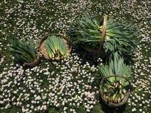 Ätlig läka källa för växt- örter i natur fotografering för bildbyråer