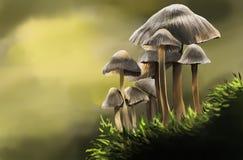 Ätlig och vuxen skogchampinjon stock illustrationer
