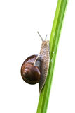 ätlig over snailwhite Arkivfoton