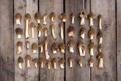 Ätliga champinjoner för Morel på träbakgrund Fotografering för Bildbyråer