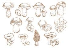 Ätliga champinjoner skissar teckningssymboler Arkivfoton