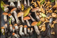 Ätliga lösa champinjoner med den gröna ormbunken från skog Royaltyfri Bild