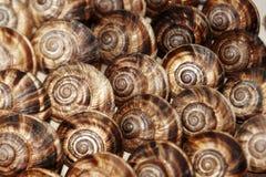 ätliga snails Royaltyfri Bild