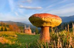 ätliga svampar Arkivfoto