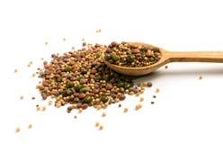 Ätligt kärna ur blandningen med den torra rädisan, senap, linser, alfalfafrö arkivfoton