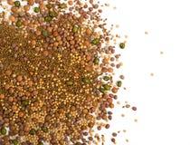 Ätligt kärna ur blandningen med den torra rädisan, senap, linser, alfalfafrö royaltyfri bild
