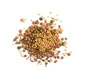 Ätligt kärna ur blandningen med den torra rädisan, senap, linser, alfalfafrö royaltyfria foton