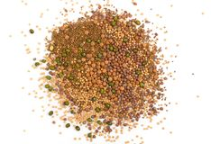 Ätligt kärna ur blandningen med den torra rädisan, senap, linser, alfalfafrö royaltyfri foto