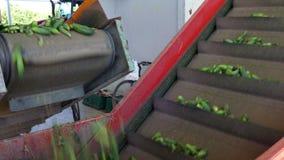 Ättiksgurkor på en trampkvarn lager videofilmer