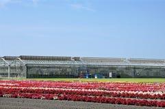 Äußerer Blumenkindertagesstätten- und -gewächshausgartenbau Stockbilder