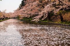 Äußerer Burggraben füllte mit der petalsmay Kirschblüte wird genannt ` Hanaikada-` oder Kirschteppich an Hirosaki-Park, Aomori, T Stockfotos