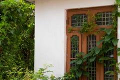 Äußeres Hausfenster bedeckt mit Blattrebe stockfoto