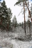 Även i det mest kalla vädret ska du ha alltid ett varmt lynne fotografering för bildbyråer