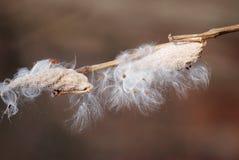 Även kan torkade växter vara härliga Fotografering för Bildbyråer