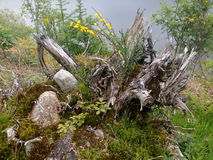 Även ser döda träd härliga Arkivfoto