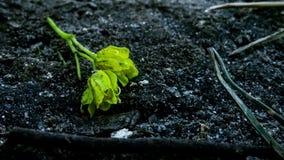 Även växter kan vara ensamma Arkivbild