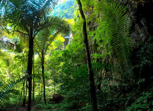 Äventyra bakgrund. Göra grön djungeln Royaltyfri Bild