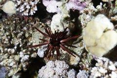 äventyrar det röda havet Royaltyfri Foto