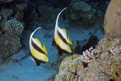 äventyrar det röda havet Royaltyfria Foton