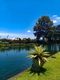 反对天空蔚蓝和湖的美丽的庭院 免版税库存照片