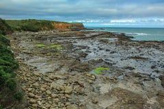 古玩海湾在南方,在古老化石森林Catlins的,南岛,新西兰的看法 图库摄影