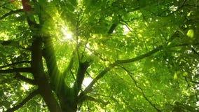 发光通过茂盛植物的迷惑的太阳光芒 影视素材