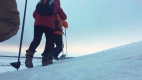 后面观点的有迁徙的杆、背包和雪靴的三个旅游徒步旅行者 与背包的愉快的徒步旅行者小组 影视素材