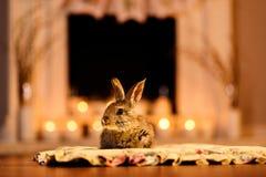 坐由壁炉的兔子 库存照片