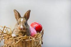 复活节兔子和复活节彩蛋在灰色背景五颜六色的鸡蛋在巢篮子和一点兔子开会 库存照片
