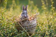 复活节兔子狩猎在绿草的复活节彩蛋 免版税库存照片