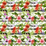 夏天花,在单色镶边背景的草地早熟禾 花卉模式重复 与黑条纹的水彩 向量例证