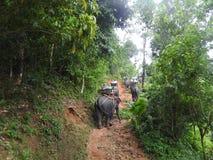 大象徒步旅行队在美丽如画的达奥岛朴公园在泰国 库存照片