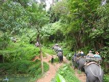 大象徒步旅行队在美丽如画的达奥岛朴公园在泰国 免版税库存图片
