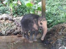 大象徒步旅行队在美丽如画的达奥岛朴公园在泰国 库存图片