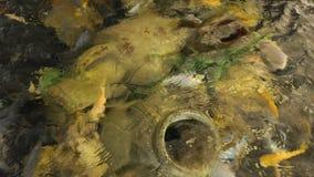 大鱼缸用起泡沫的水 影视素材