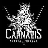 大麻天然产品印刷品 库存照片