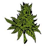 大麻画的设计 库存图片
