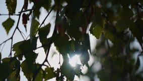 太阳的光芒通过叶子做他们的方式 美好的风景 影视素材