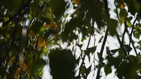 太阳的光芒通过叶子做他们的方式 美好的风景 股票录像