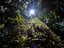 太阳的雨林 免版税图库摄影